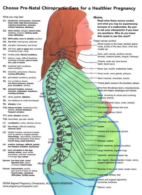 chiropractic pregnancy chart