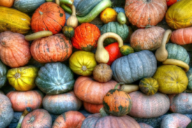Fall Superfoods for healthy living Dr. Lauren Love Chiropractor